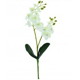 Vara de orquídea