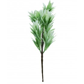 Ramo plantas silvestres