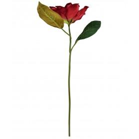Vara de magnolia