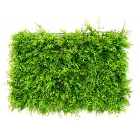 Plancha de pino con hierbas verdes