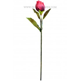 Vara de tulipán