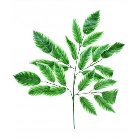 Rama de hojas del eleagno. Precio €/U