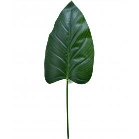 Hoja grande flor del loto