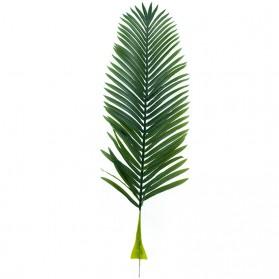 Hoja de cycas revoluta (palmera)